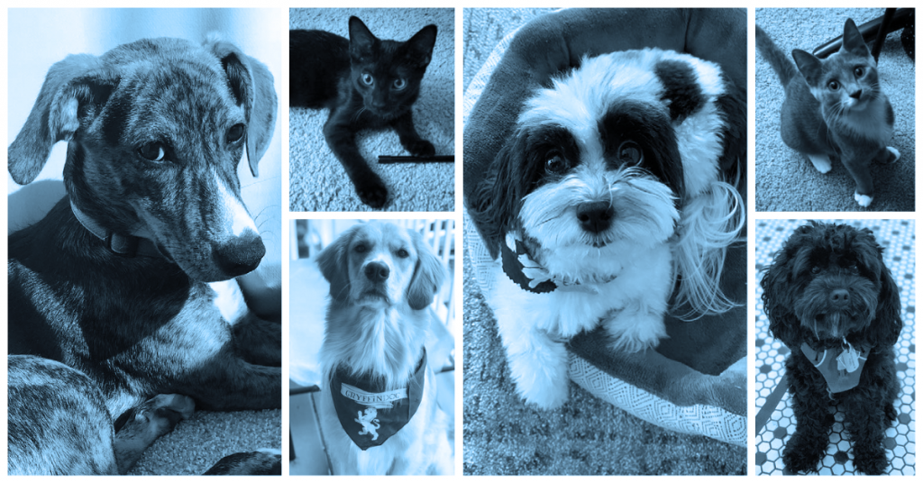 photo collage of four dogs and two cats